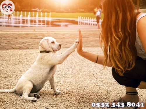 yavru köpek eğitmi
